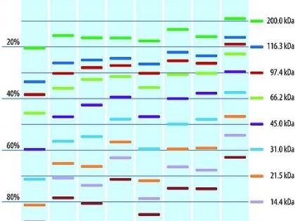 TruPAGE™ Eelvormitud Geelid: Uus lahendus Teie eksperimentide kaitsmiseks soovimatute valgu muundamiste eest